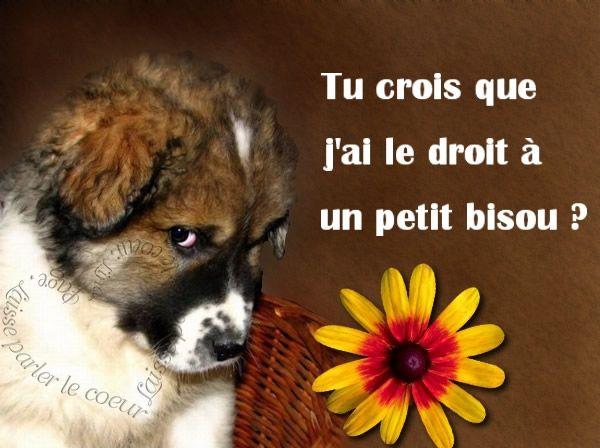 Tu crois que j'ai le droit à un petit bisou ? #bisous chiens ...