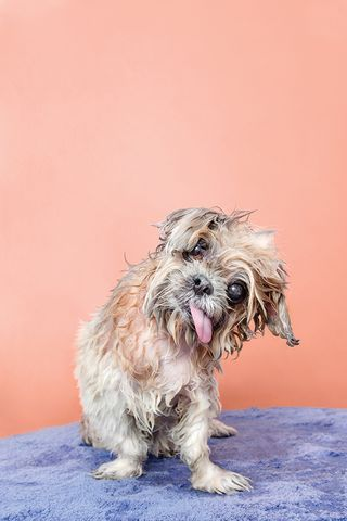 Dog Portraits Offer A Look Into Canine Souls Dog Photograph Dog
