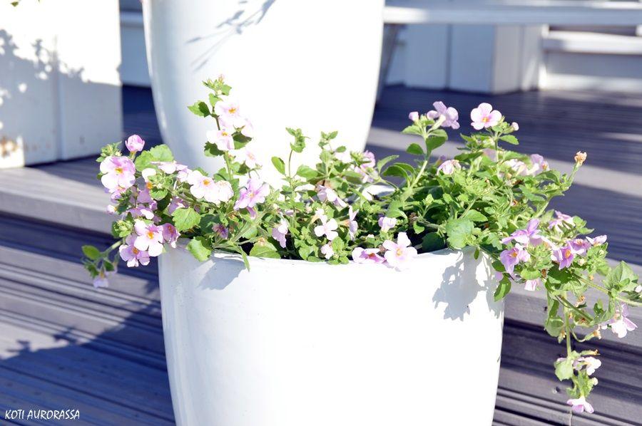 Summerflowers.  #kannustalo #kotiaurorassa
