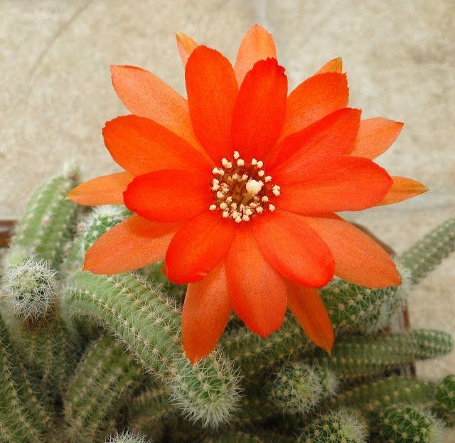 Jardines de cactus y suculentas: septiembre 2011
