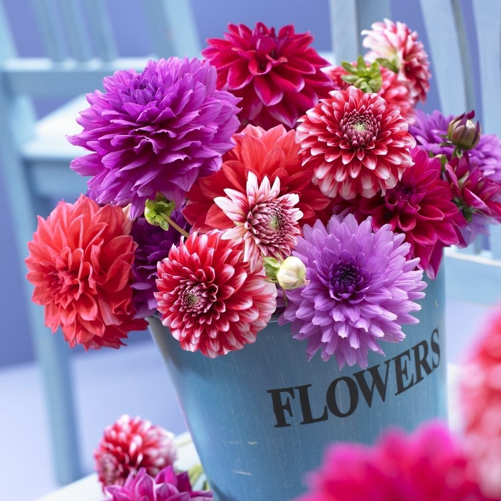 What do you know about flower talk dahlia flower arrangements dahlia arrangement izmirmasajfo