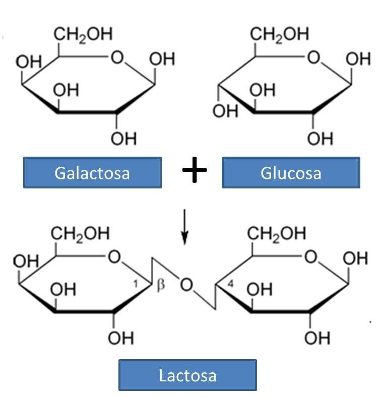 M La vida sin lactosa Intolerancia a la lactosa 1 Salud, Dietas - fresh grupos de la tabla periodica unam