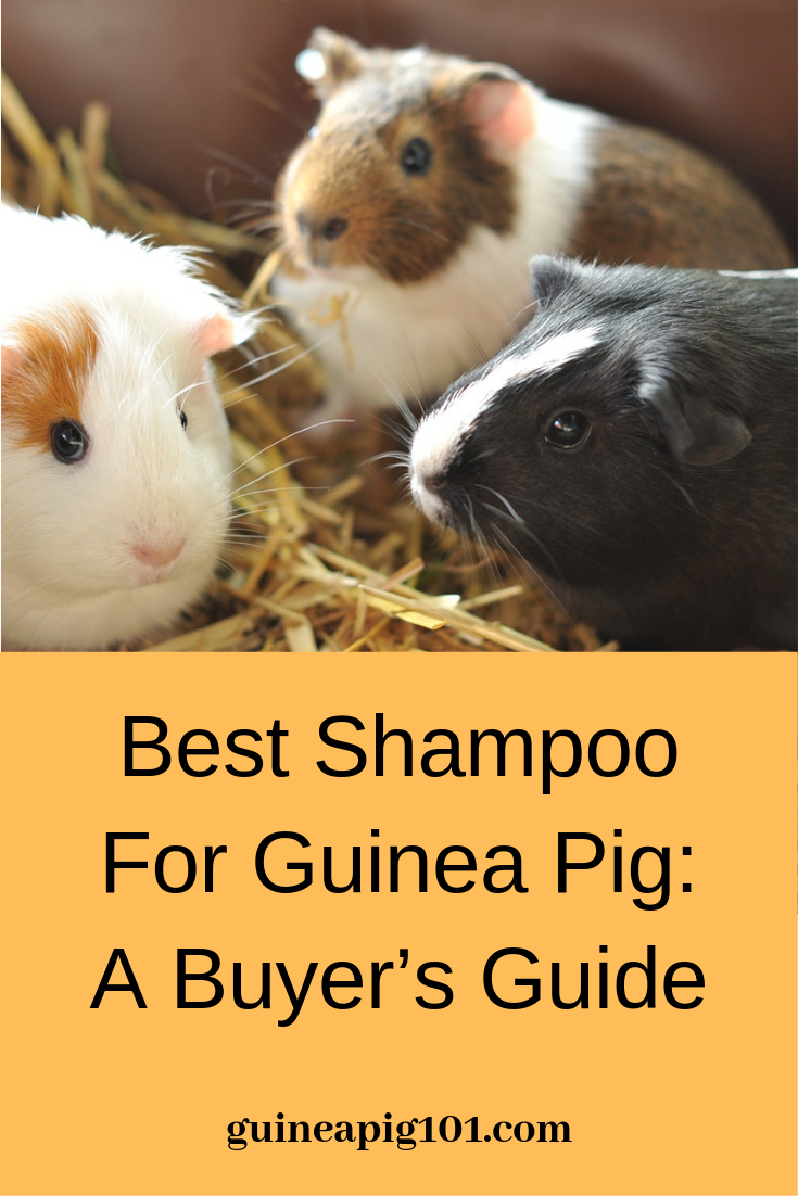 Pin On Guinea Pig Cage Bedding Food Toys And More