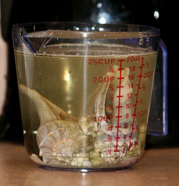 Cleaning and restoring colors in seashells bord de mer for Vinaigre eau de javel