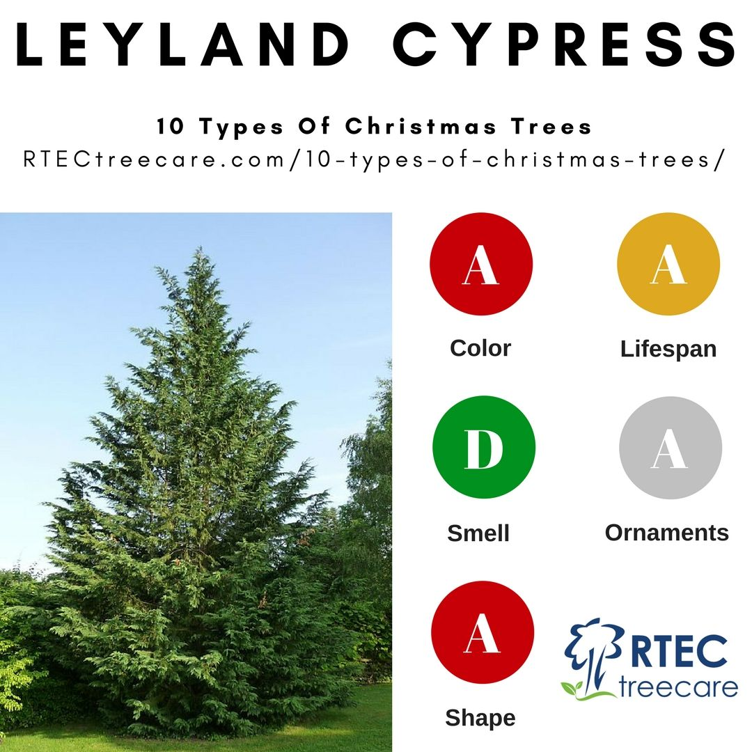 10 Types Of Christmas Trees Find Out Which Christmastree Is Best For Your Family S Needs Pros Cons Of Firs Pines Spruces Cypress Chr Trees Types