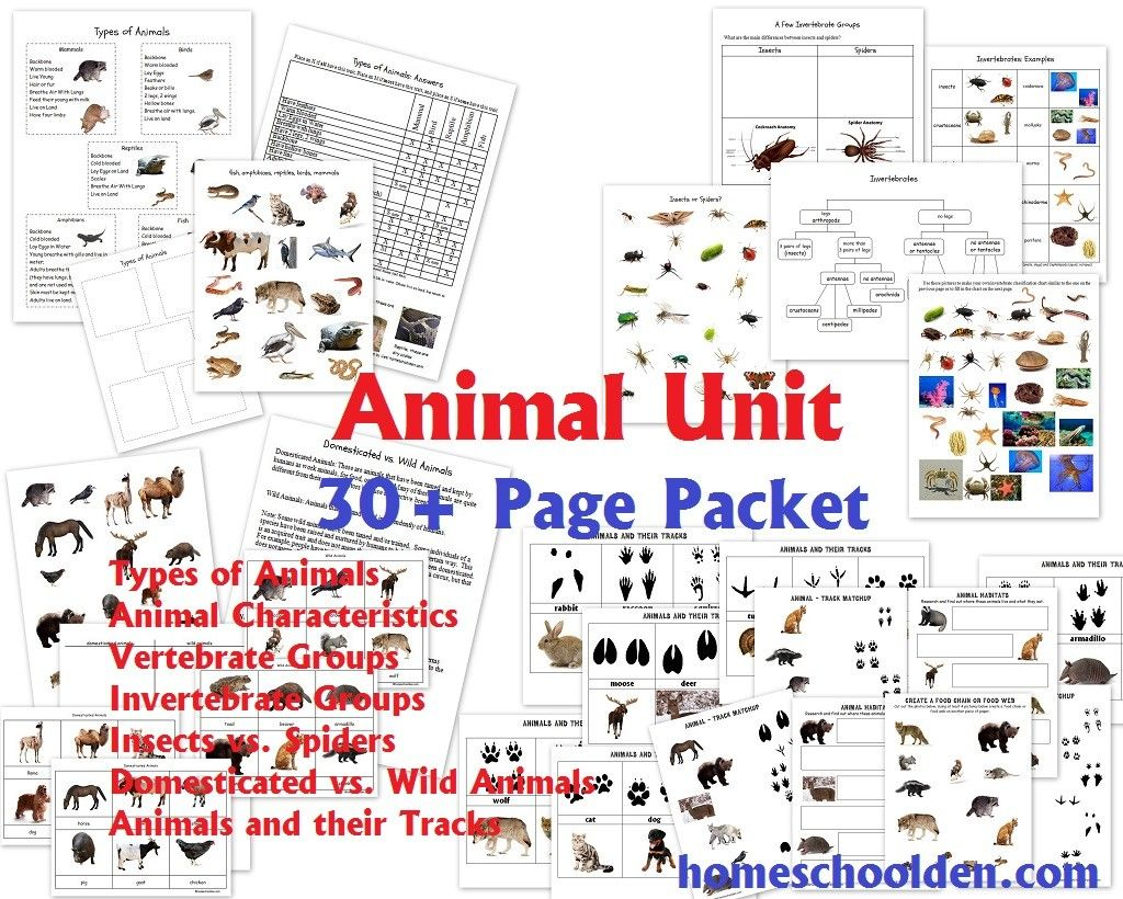 Animal Unit Vertebrate Invertebrate Groups Worksheet
