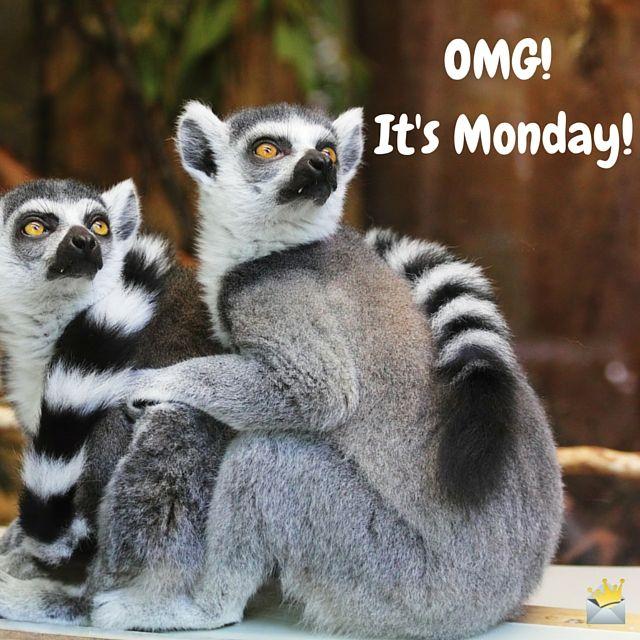 Bildresultat för another week animals it is monday
