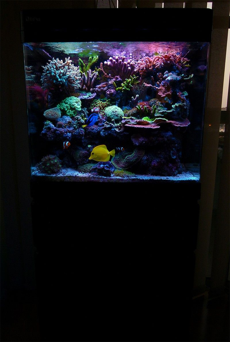 Red Sea Max 130d Best All In One Tank You Can