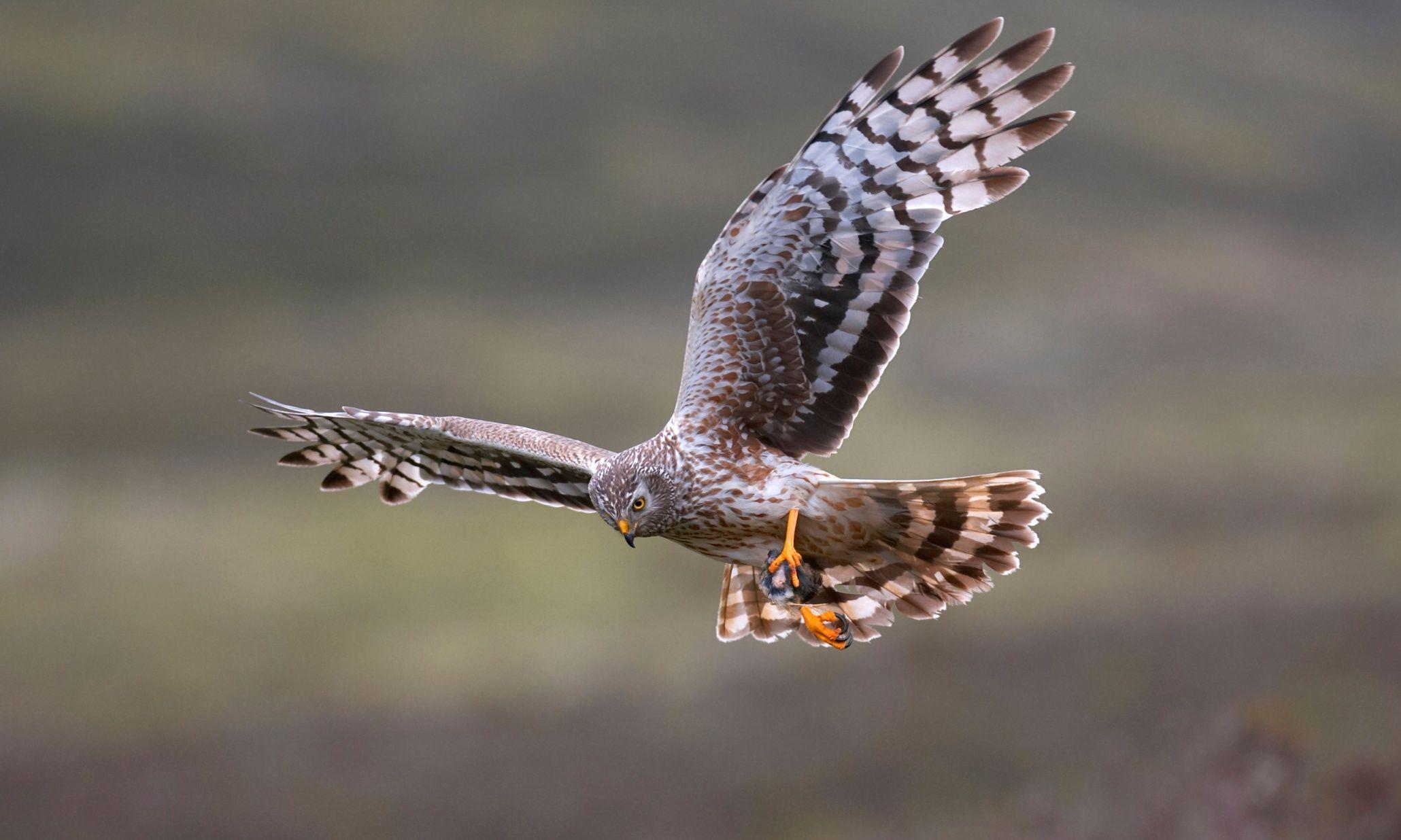 Chris Packham slams 'shameful' silence of Britain's conservation charities