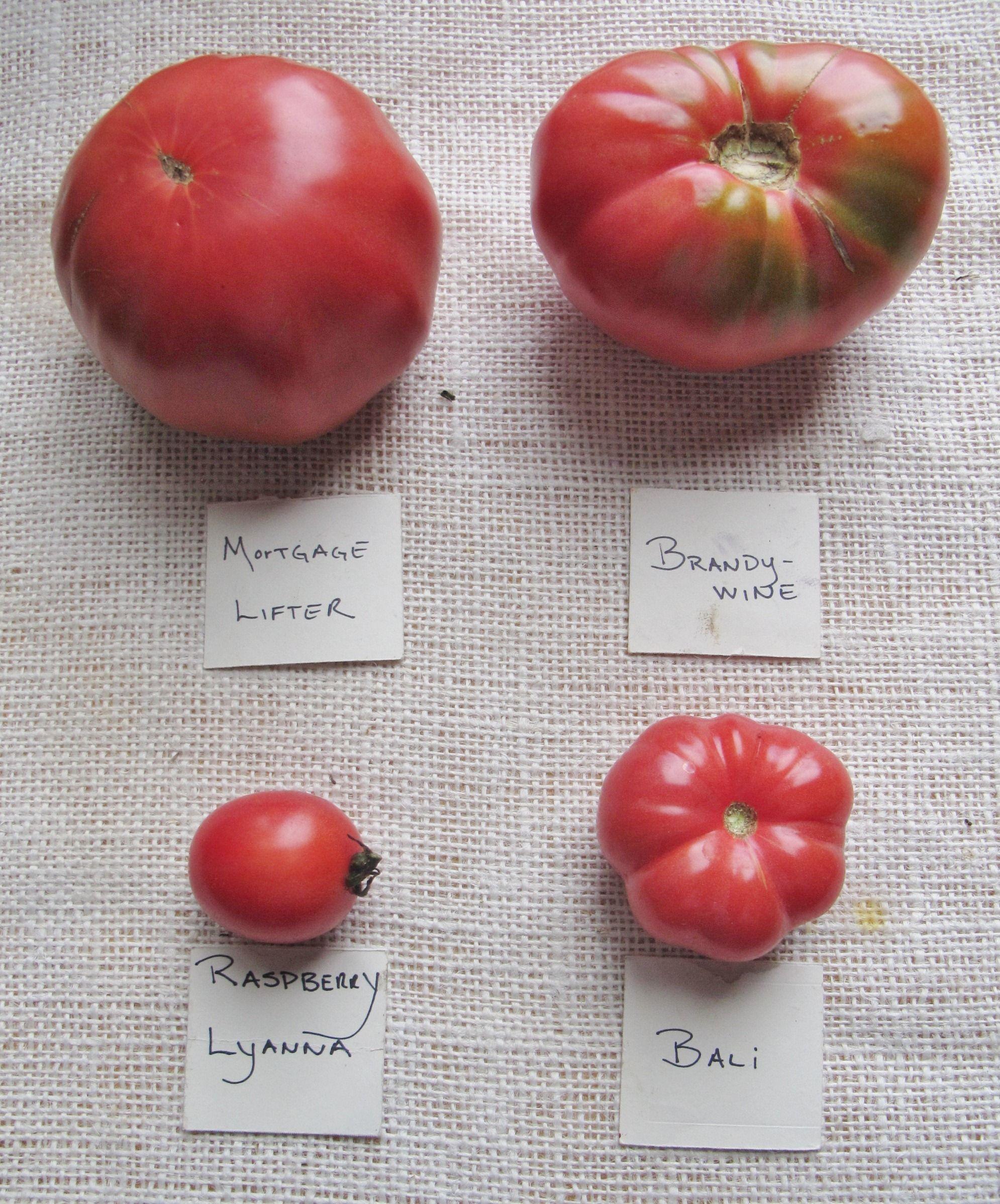 Heirloom Tomatoes Varieties