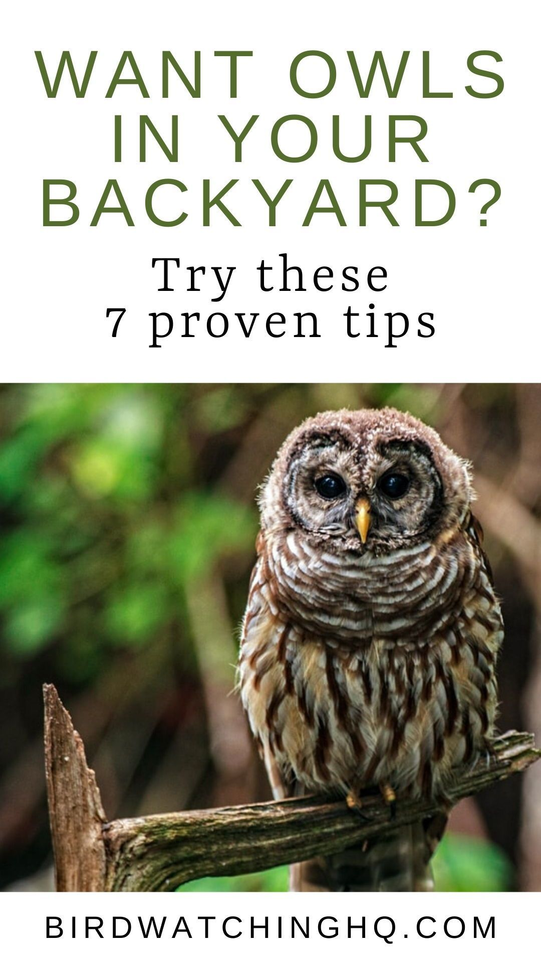 7 Proven Ways To Attract Owls 2021 Bird Watching Hq Backyard Birds Watching Backyard Animals Backyard Birds Sanctuary
