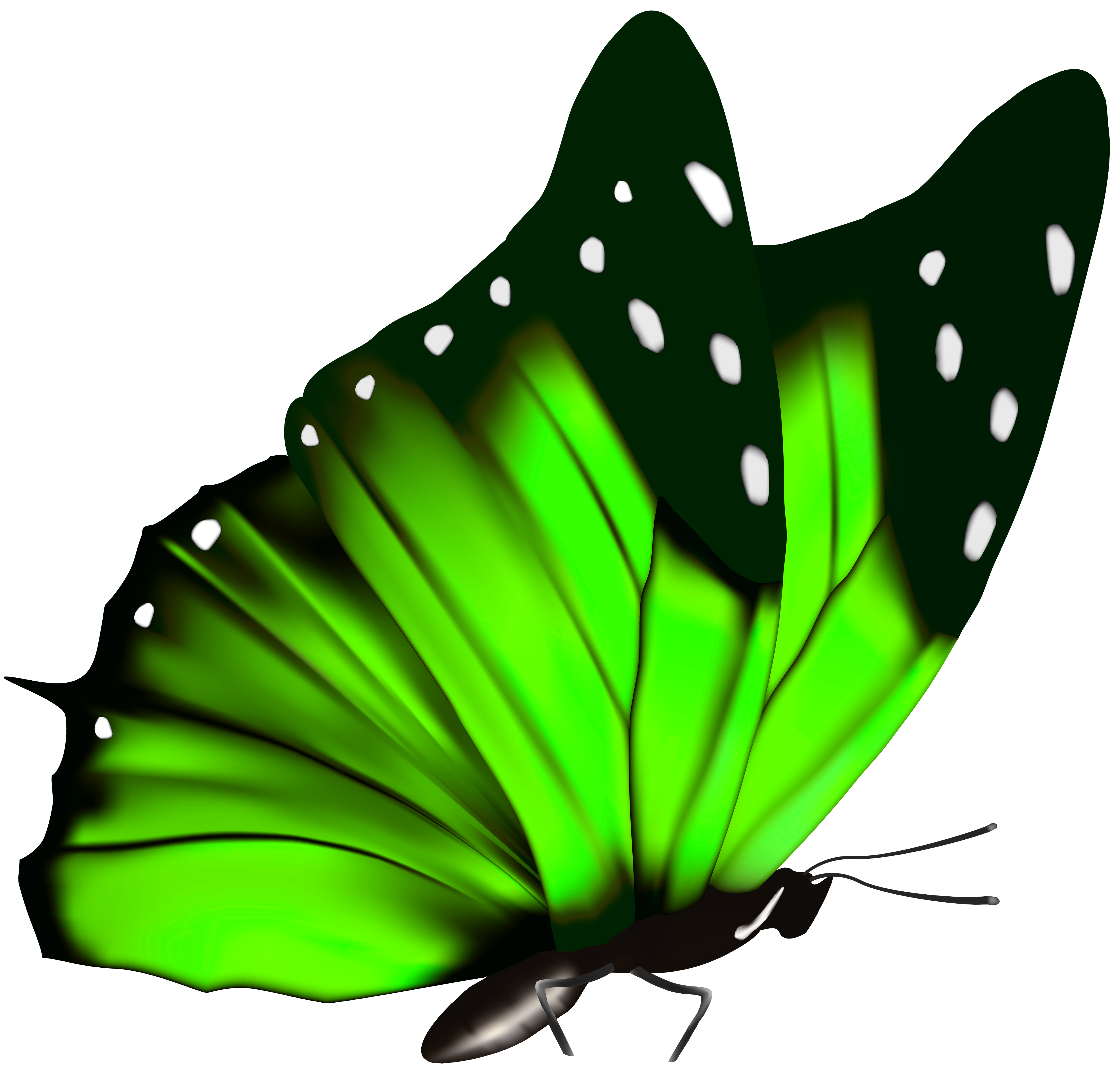 Green Butterfly Png Clipart Image Butterfly Illustration Butterfly Watercolor Butterflies Svg