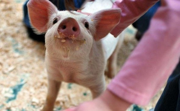 this little piggy is smiling