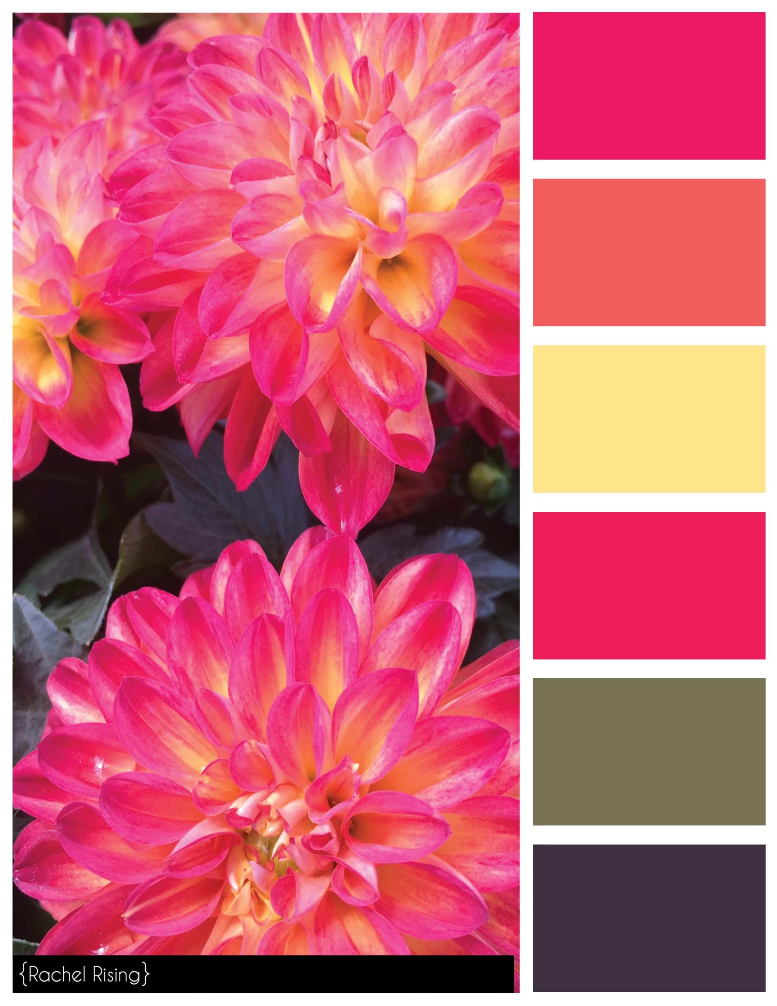Rachelrisingdesign Color Swatches Color Schemes Color Blending