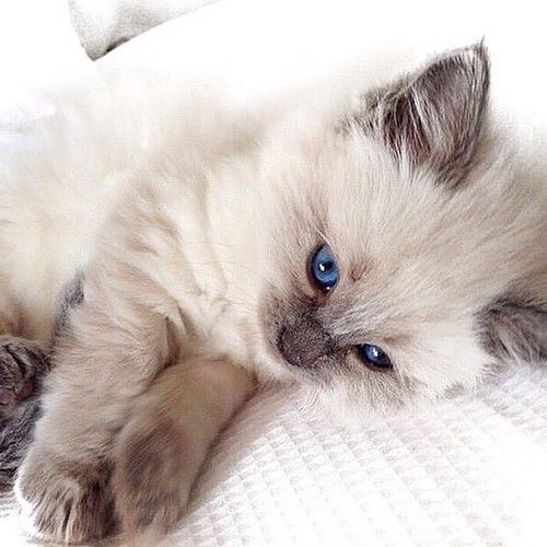 Pin By Tina On Cats And Kittens With Images Cats