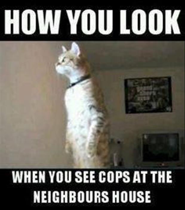29e8c01dc2e8e23103d7606d5442888d cops at the neighbors house toooo funny!!! pinterest funny