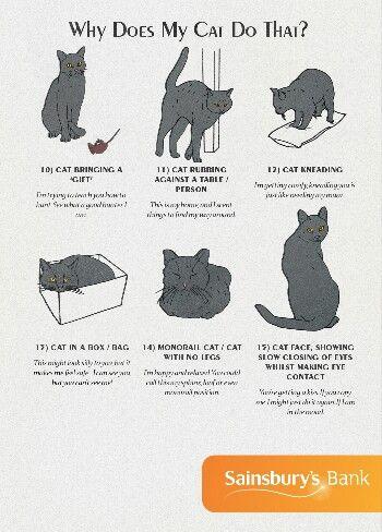Cat postures | Cat behavior, Cat facts, Cat language