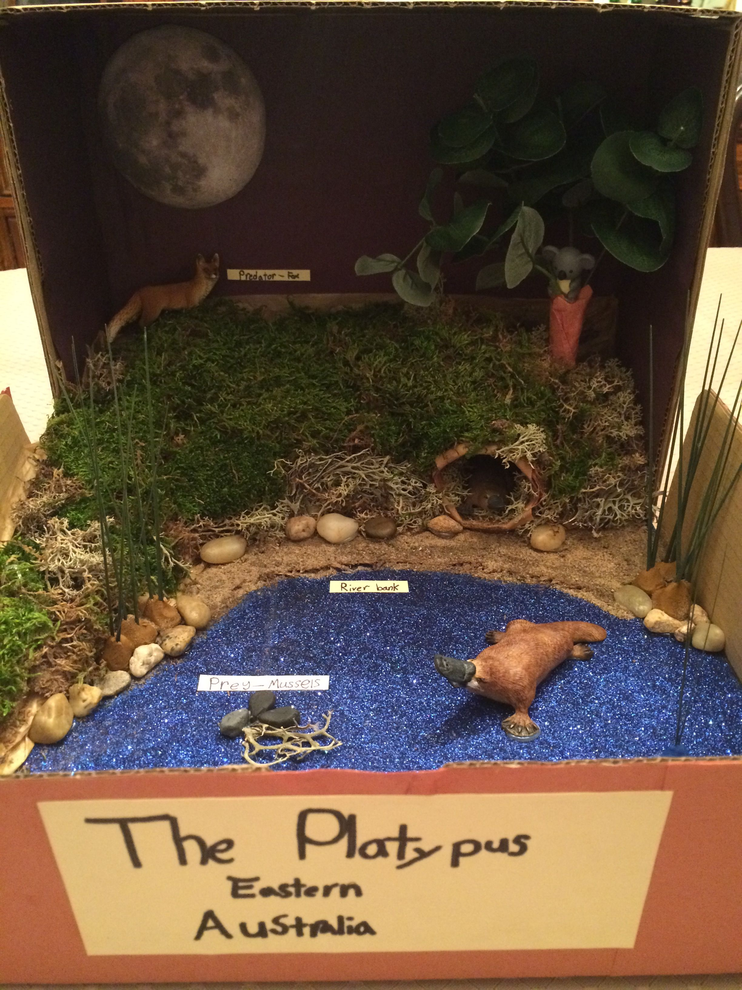 Platypus In Its Natural Habitat Diorama Grade 6 Biodiversity Project Habitats Projects Science Projects For Kids Habitats