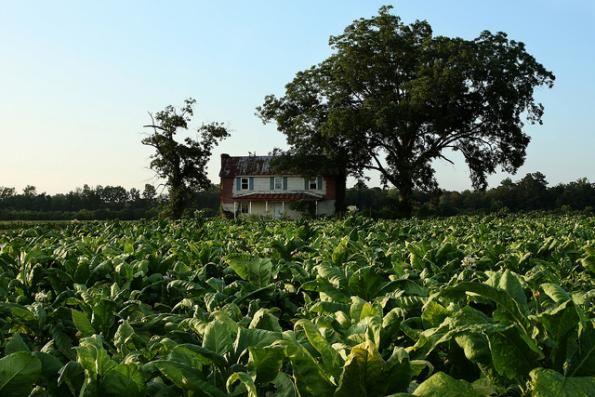 Eastern Nc Tobacco Field Farm Buildings North Carolina Homes Beautiful Places
