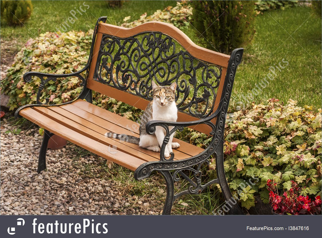 Terrific Garden Bench Cat Pets Cat On Garden Bench Stock Photo Inzonedesignstudio Interior Chair Design Inzonedesignstudiocom