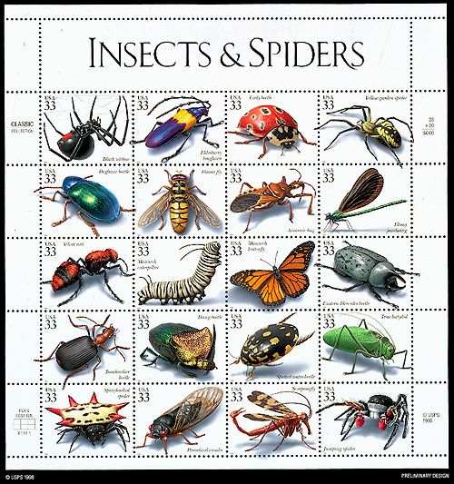 unusual insects pictures