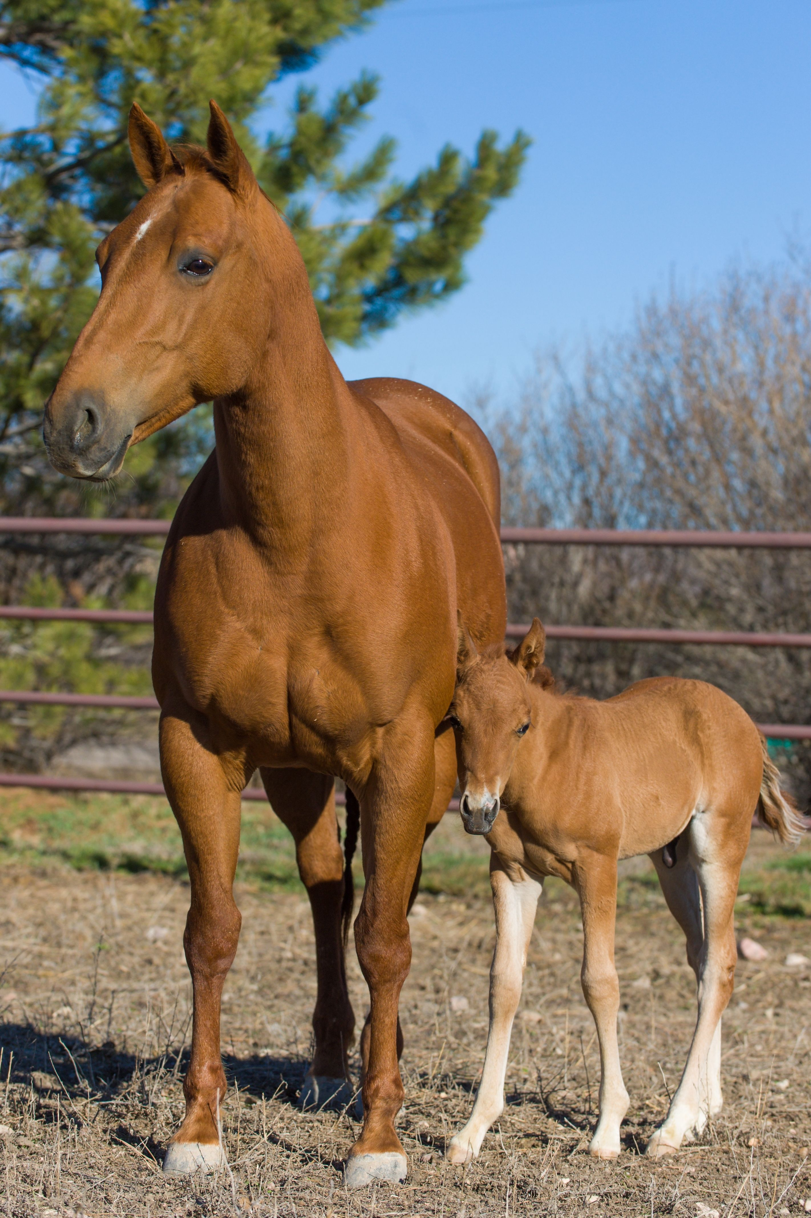 Are you on schedule with deworming this spring take a