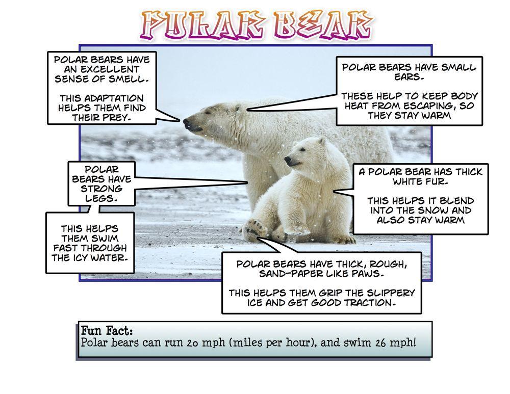 Adaptations Experiment Polar bear, Animal adaptations