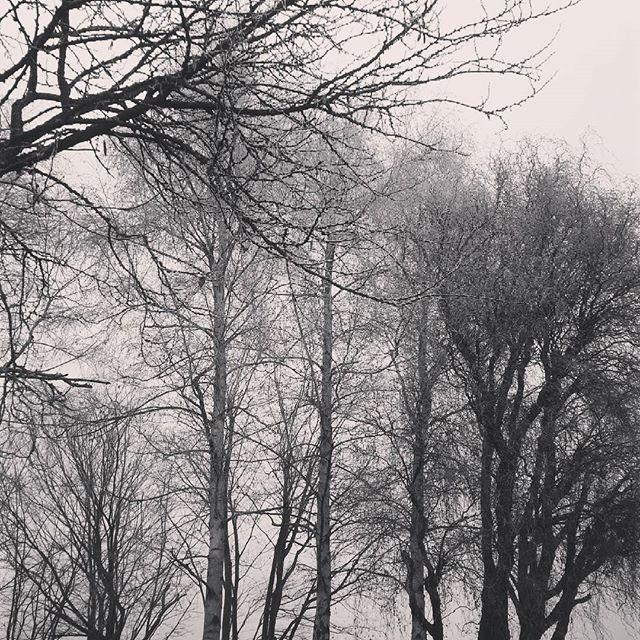 Beautiful landscape outside #winterwonderland #frost #foggy
