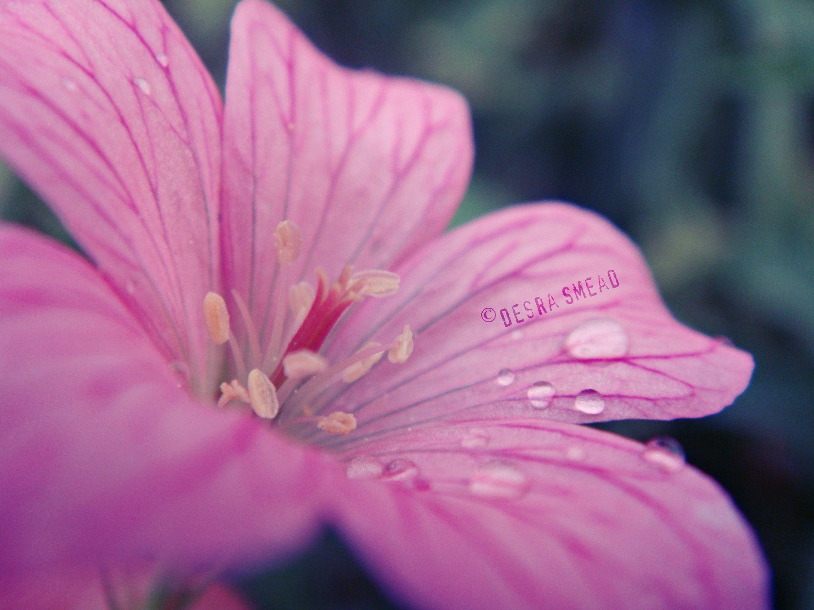 Rest in nature bathe in simplicity unatureus vibrationu by desra