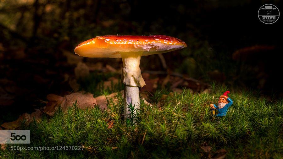 LOOK WHAT I FOUND!!! by HatCatPhotography