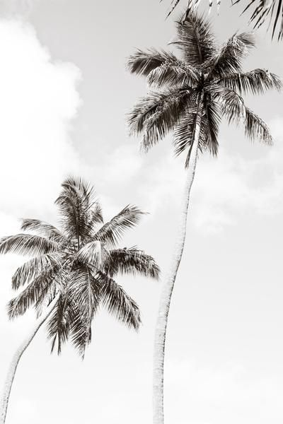 Palm Trees No 1 Large Black And White Fine Art Photography Print By Cattie Coyle Photography Palm Tree Photography Palm Tree Pictures Palm Trees Wallpaper