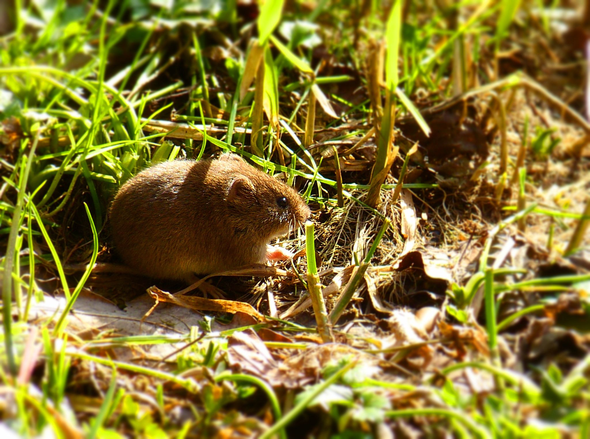 Suddenly this little mouse appeared out of a hole in the field  ...