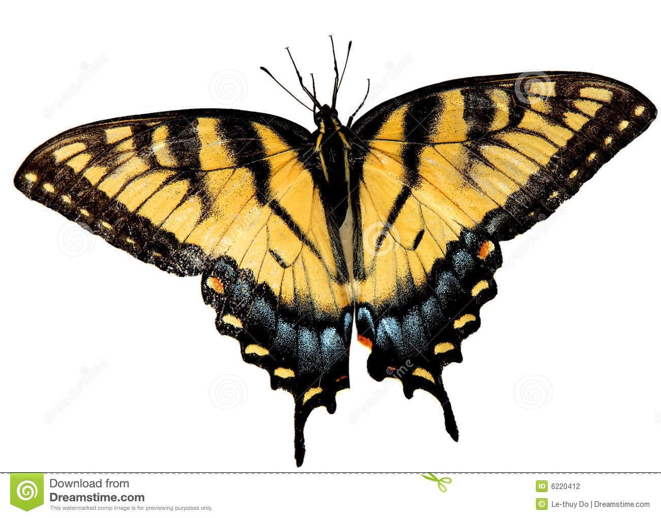 Easter Tiger Swallowtail Butterfly Download From Over 36 Million High Quality Stock Photos Images Vectors Sign Swallowtail Butterfly Swallowtail Butterfly