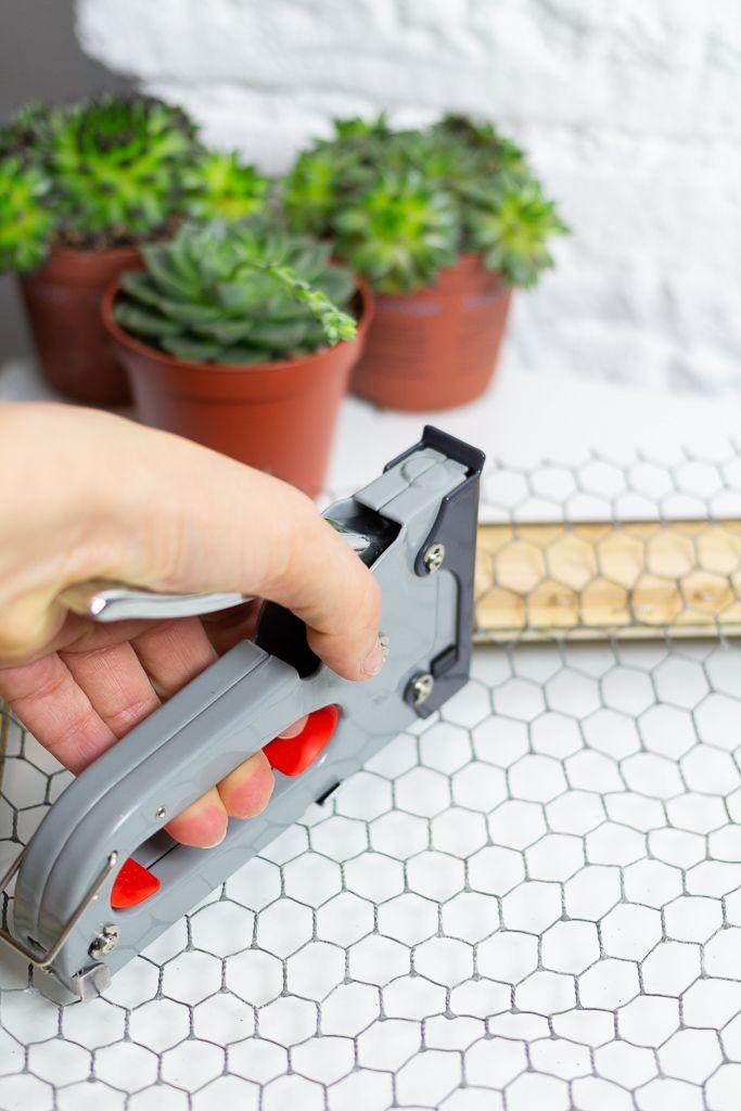 DIY Sukkulenten Bilderrahmen - Garten Fräulein - Der Garten Blog