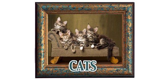 Uw kat en zijn omgeving.