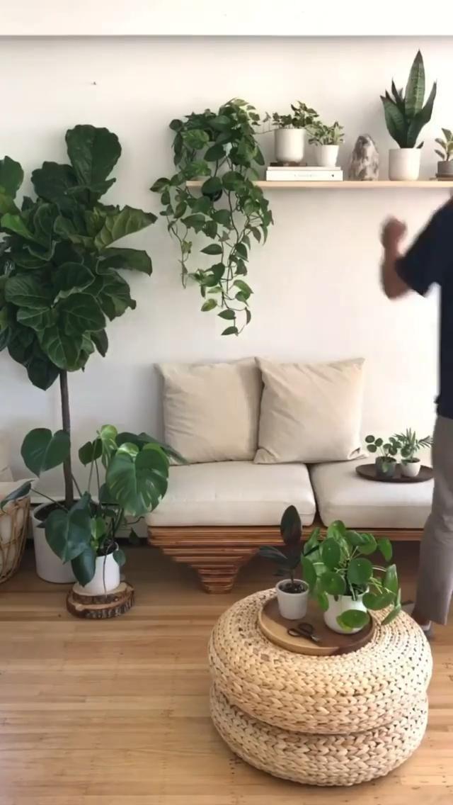 Photo of A great houseplant idea | houseplants inspiration