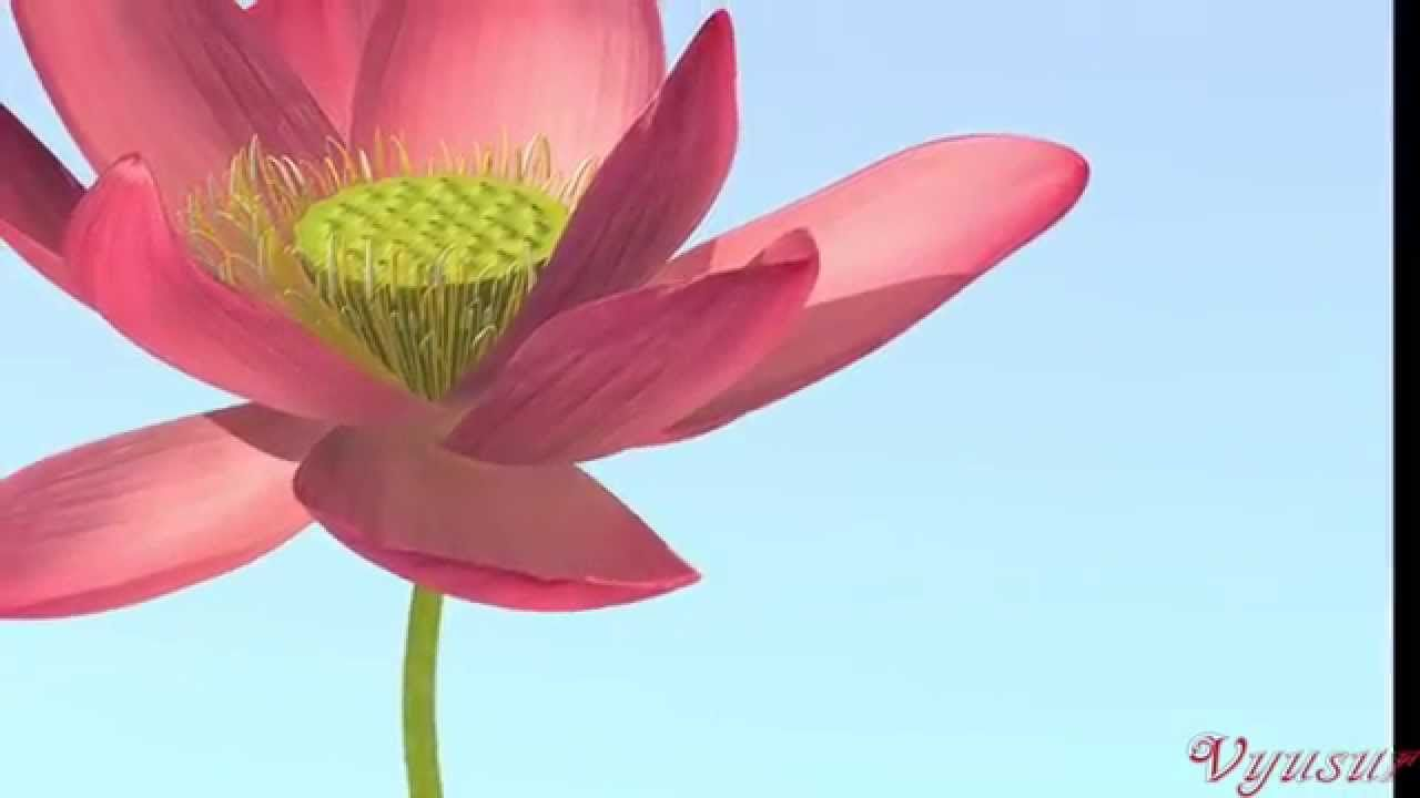 Lotus Flower Modeling Part Ii Petals Stamens Videos By