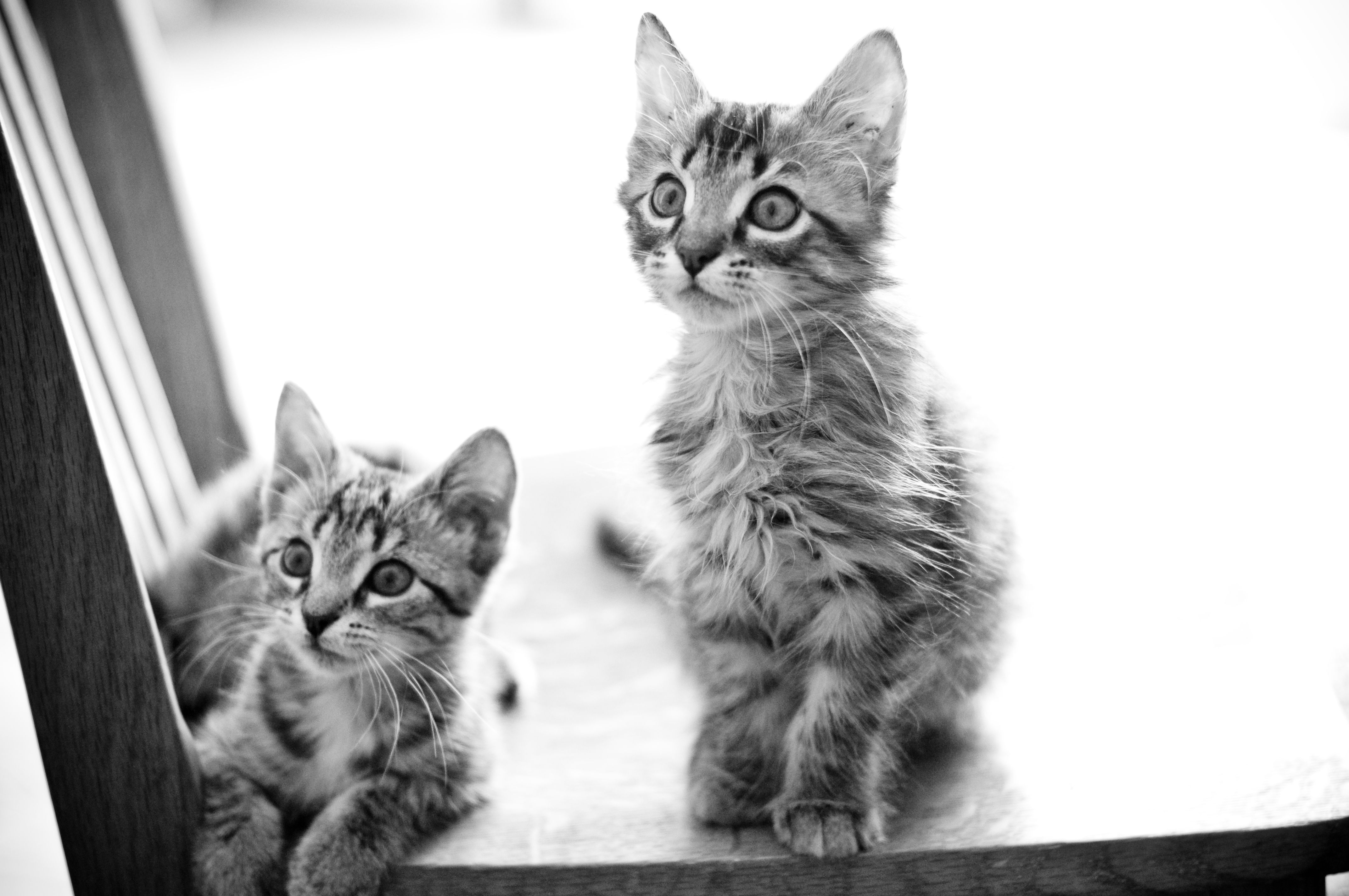 Sweet, little baby cats. Baby cats, Cute animals, Cute