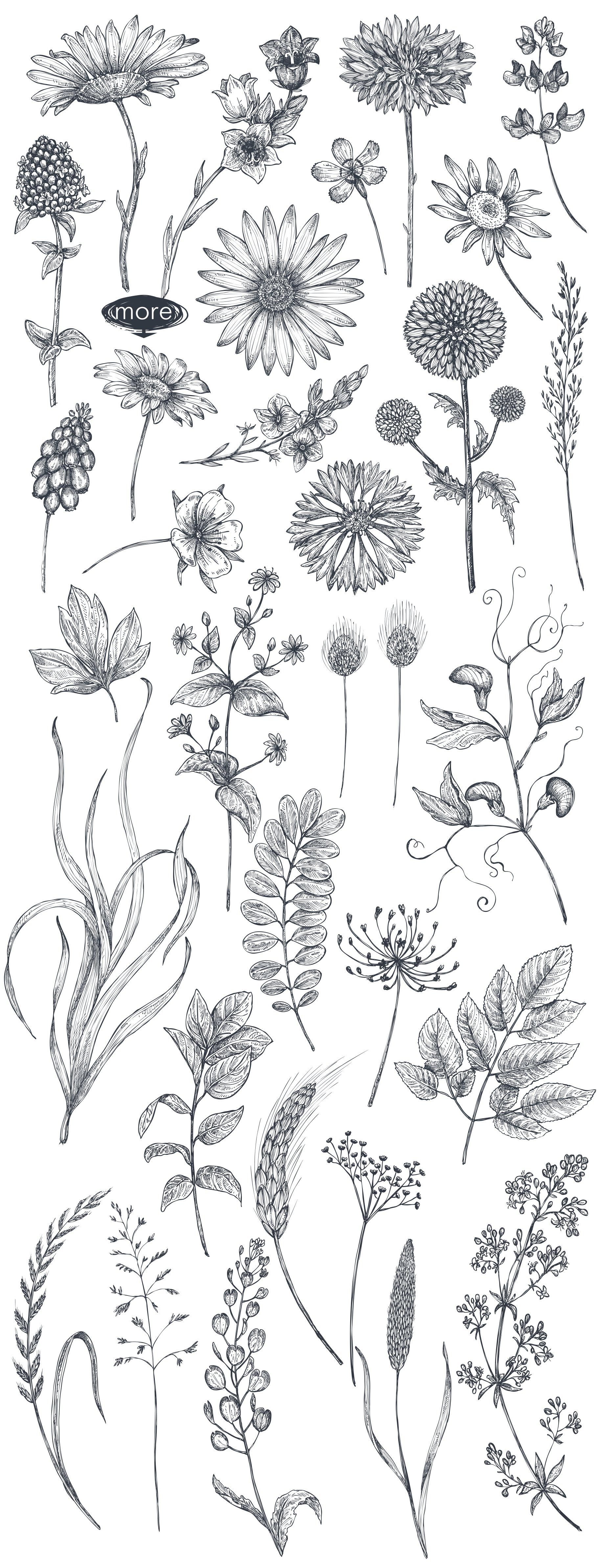 Vector insects and wildflowes set Hand drawn flowers