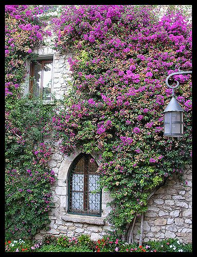 Flowers of Eze