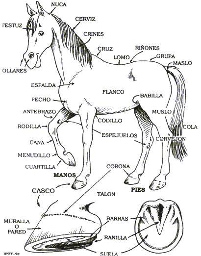 Caballo Senalando Las Partes De Su Cuerpo Para Colorear Anatomia Del Caballo Cuidado De Caballo Veterinaria Y Zootecnia