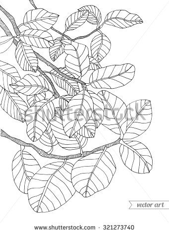 Jungle Leaves Pages Coloring Pages