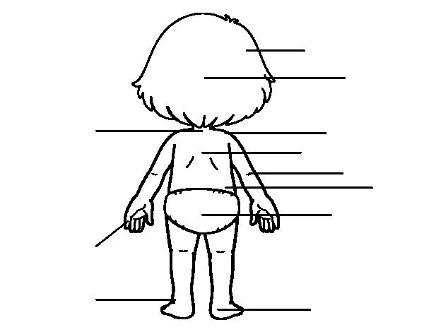 Disegno Di Posteriore Del Corpo Da Colorare Stampare O Scaricare