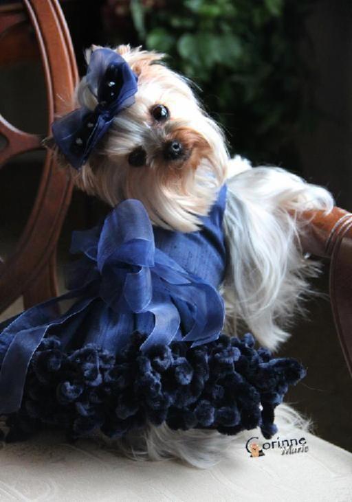 Fashion Show Palm Desert 2013 Items For Sale Dog Dresses Pet Apparel Designer Dresses Yorkie Yorkie Dogs Yorkshire Terrier