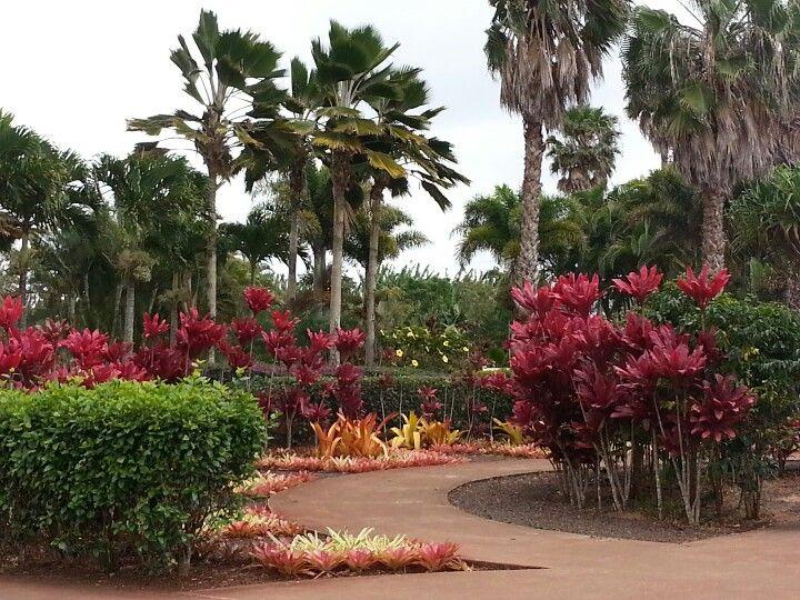 Tropical Garden In Hawaii