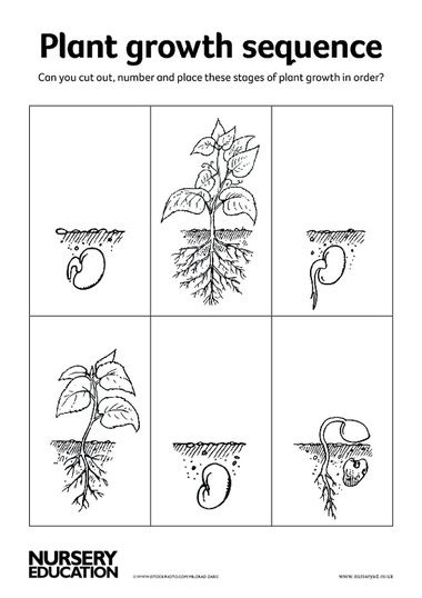 Plant Growth Sequence Cards 2015 Vgg Renaissance