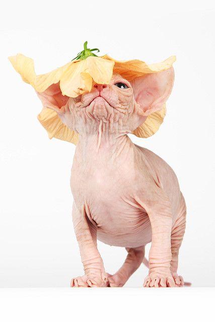 ::O-T-O-M-I:: cattery