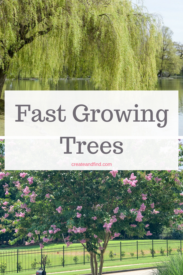 Fast Growing Privacy Trees In 2020 Fast Growing Trees Privacy Plants Backyard Trees