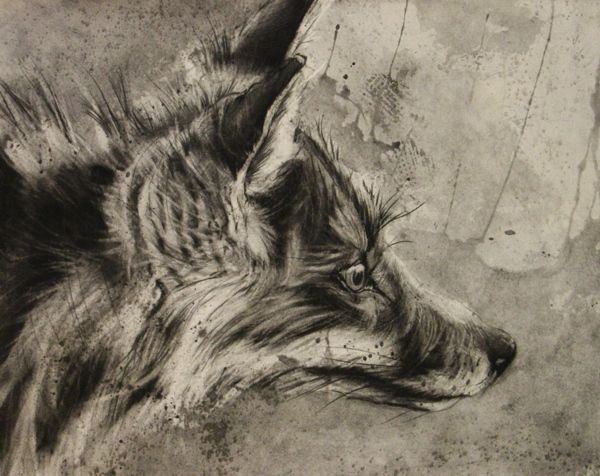 Dogs, Wolves, and Foxes by Alexander Landerman, via Behance