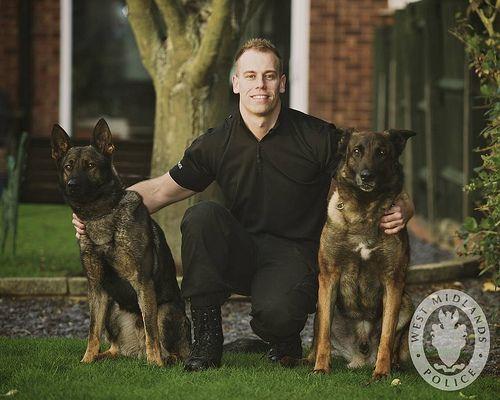 Distinctive Petsitting Inc Dog Training Dog Training Collar